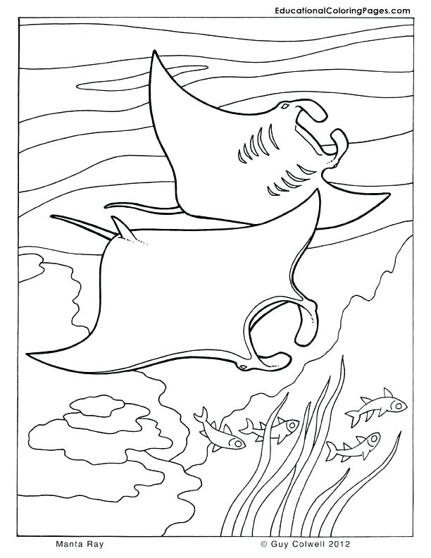 612x792 Manta Ray Coloring Page Best Ocean Coloring Pages Ideas On Ocean