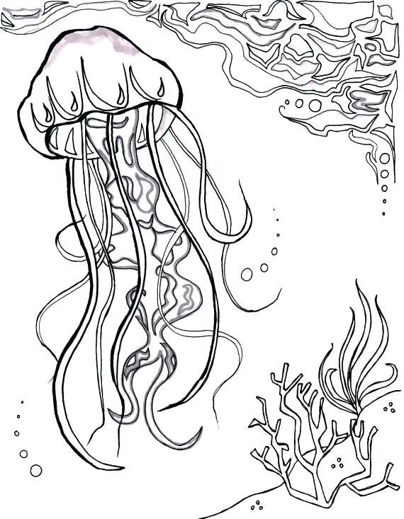 570x733 Ocean Coloring Page Free Coloring Pages View Larger Printable