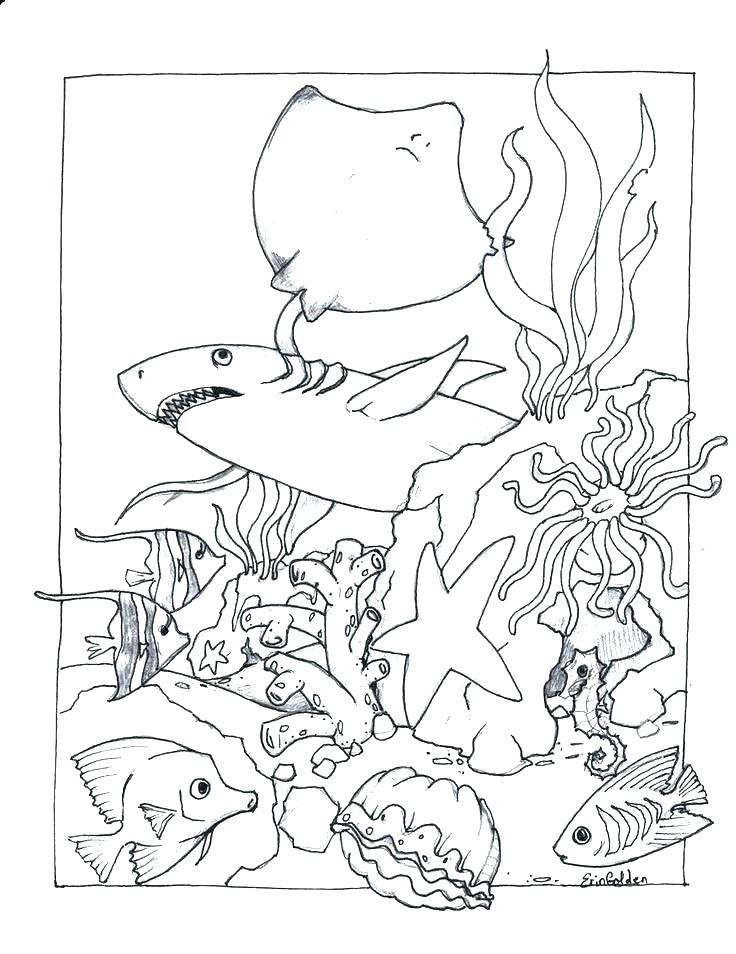 736x954 Ocean Life Coloring Pages Sea Life Coloring Pages In Addition