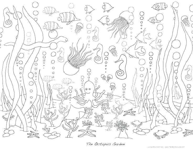 736x570 Ocean Life Coloring Pages Ocean Life Coloring Pages Ocean Life