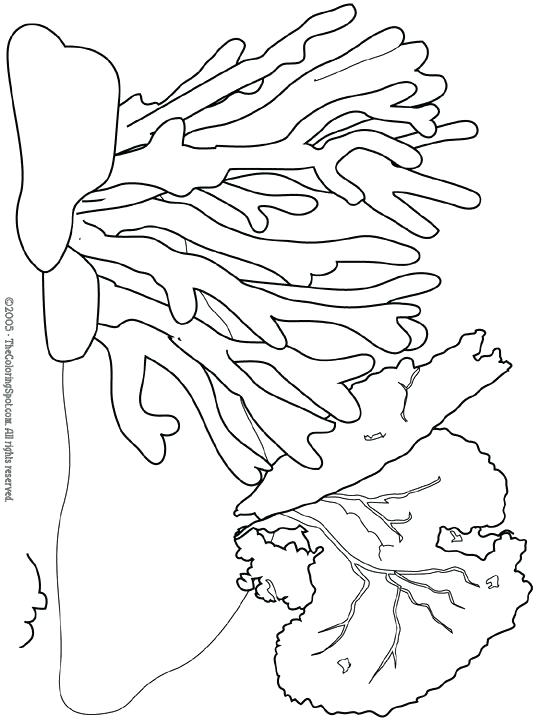 540x720 Coral Coloring Pages Coral Coloring Pages Ocean Plants Coloring