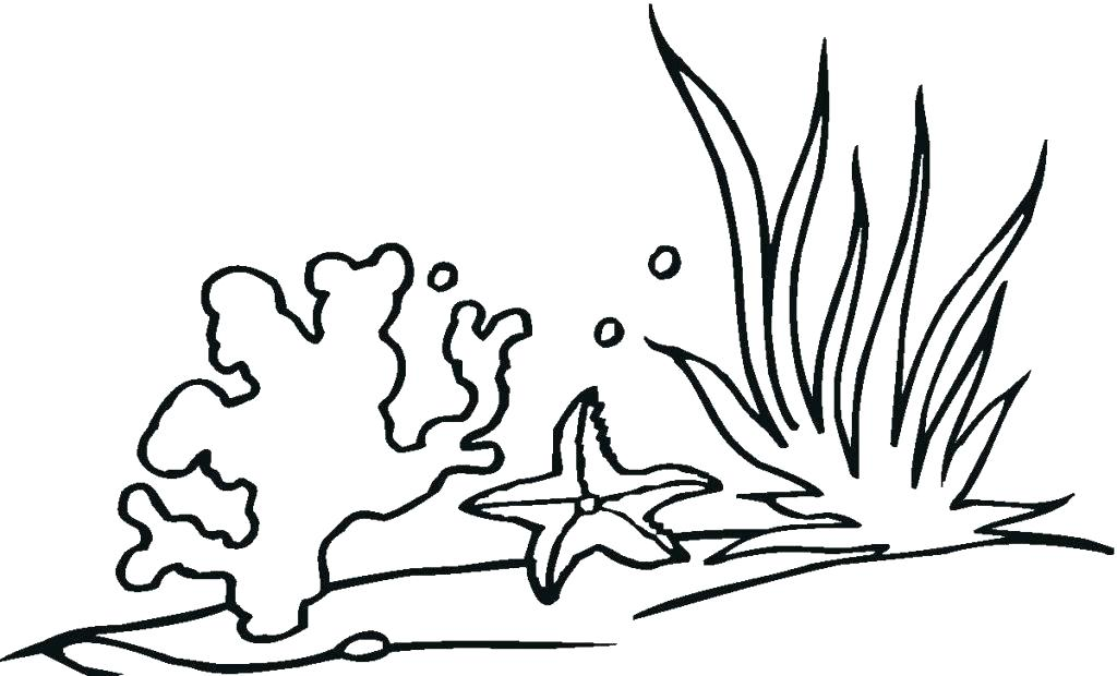 1024x620 Coloring Seaweed Coloring Pages Ocean Plants Snap Free Pictures