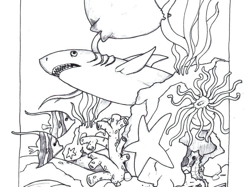 785x600 Ocean Coloring Pages Ocean Scene Coloring Page Deep Sea Animals