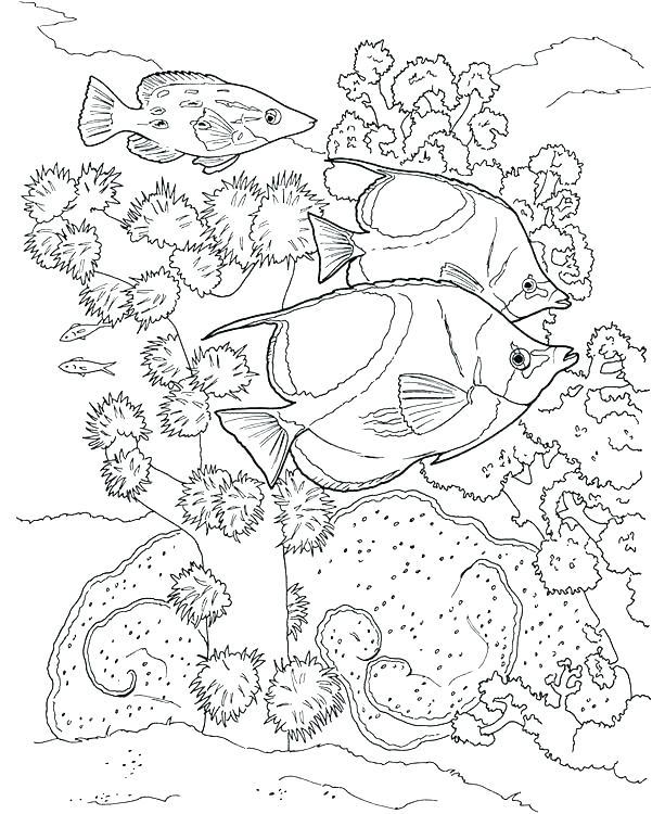 613x750 Underwater Coloring Ocean Scene Coloring Page Underwater Coloring