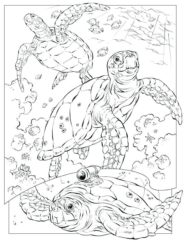 650x841 Ocean Coloring Page Ocean Scene Coloring Page Ocean Coloring Sheet