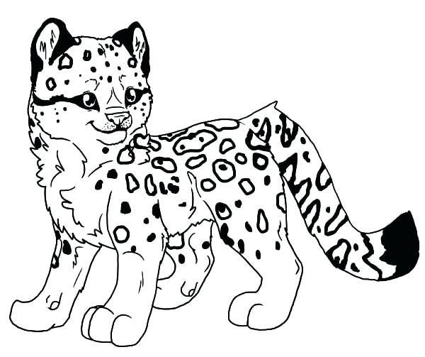600x503 Snow Leopard Coloring Pages Ocelot Coloring Page Snow Leopard