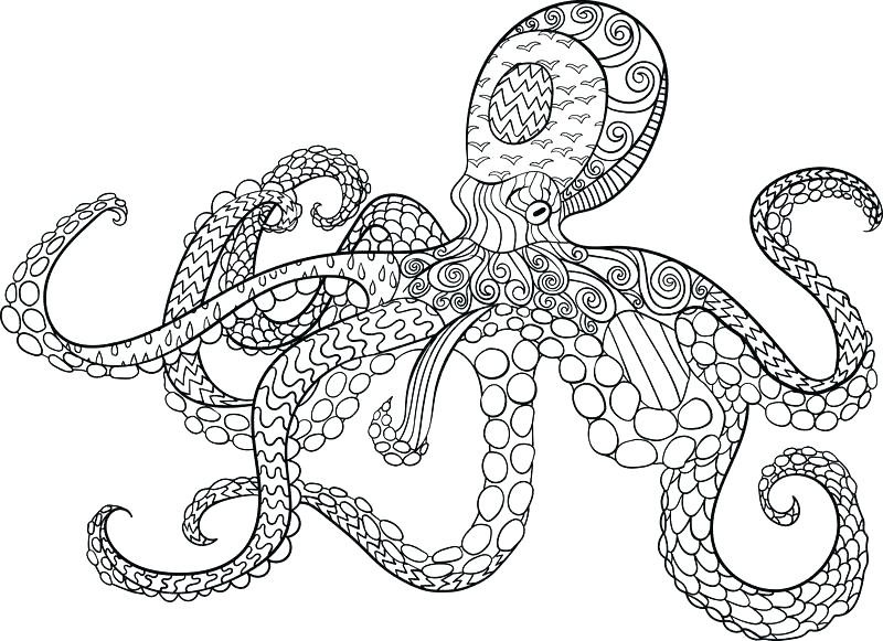 800x581 Octopus Coloring Page Octopus Color Page Dr Octopus Coloring Pages