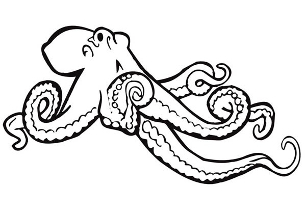 598x420 Printable Giant Octopus Coloring Page
