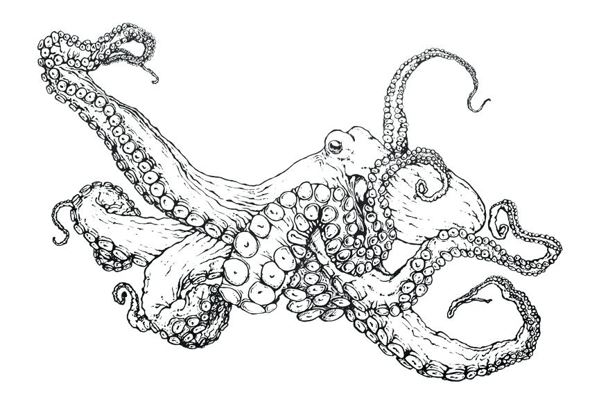 864x576 Coloring Pages Of Octopus Octopus Coloring Page Cartoon Octopus