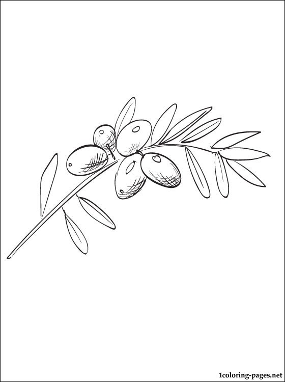 560x750 Olive Coloring Page For Free Coloring Pages