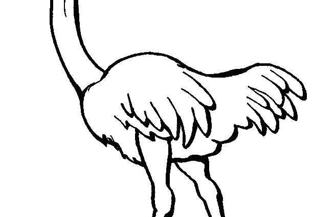 612x425 Ostrich Coloring Page Ostrich Coloring Pages Olive The Ostrich