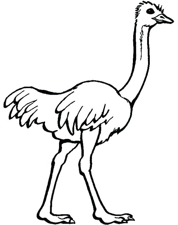 600x756 Ostrich Coloring Page Ostrich Image Coloring Page Olive