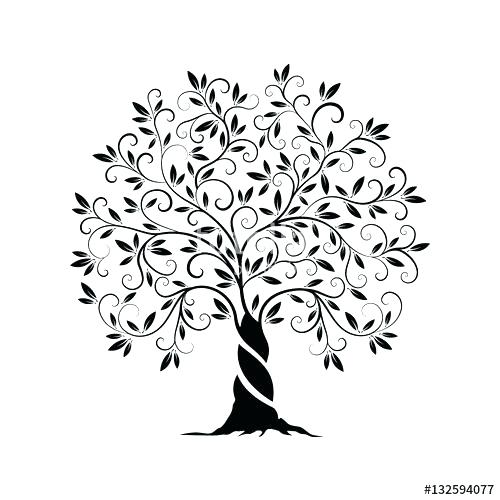 500x500 Drawing Of A Tree Bare Tree Outline Coloring Page Free Olive Tree