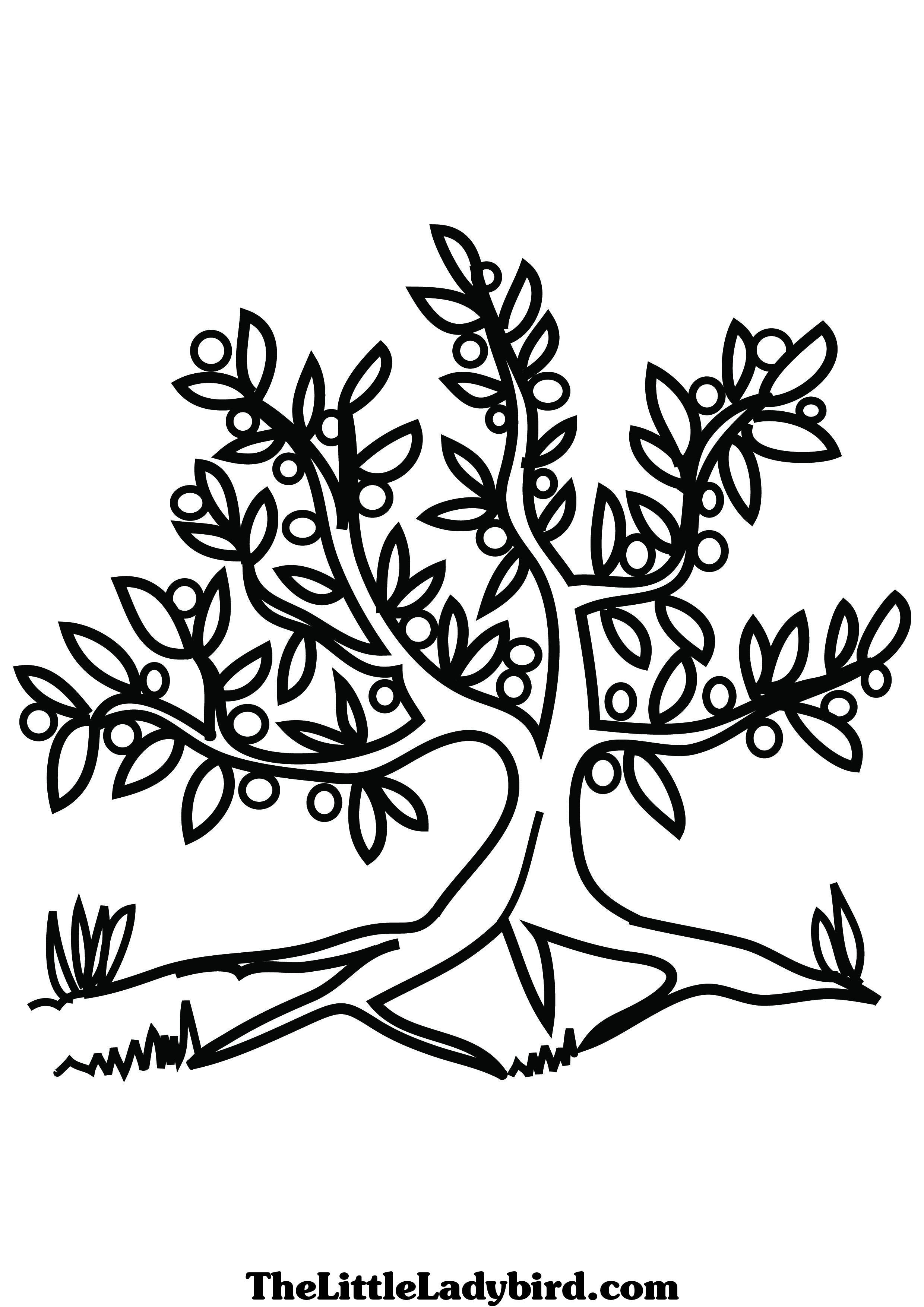 2480x3508 Olive Tree Coloring Page