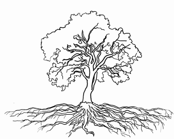 600x480 Olive Tree Coloring Page Beautiful Tree With Roots Coloring Page