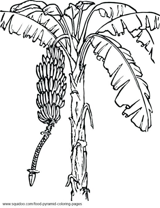 520x674 Olive Tree Coloring Page Fruit Tree Coloring Page Coloring Pages