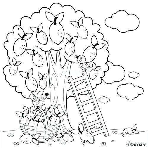 500x500 Olive Tree Vineyard Book Coloring Book Olive Tree Gallery Coloring