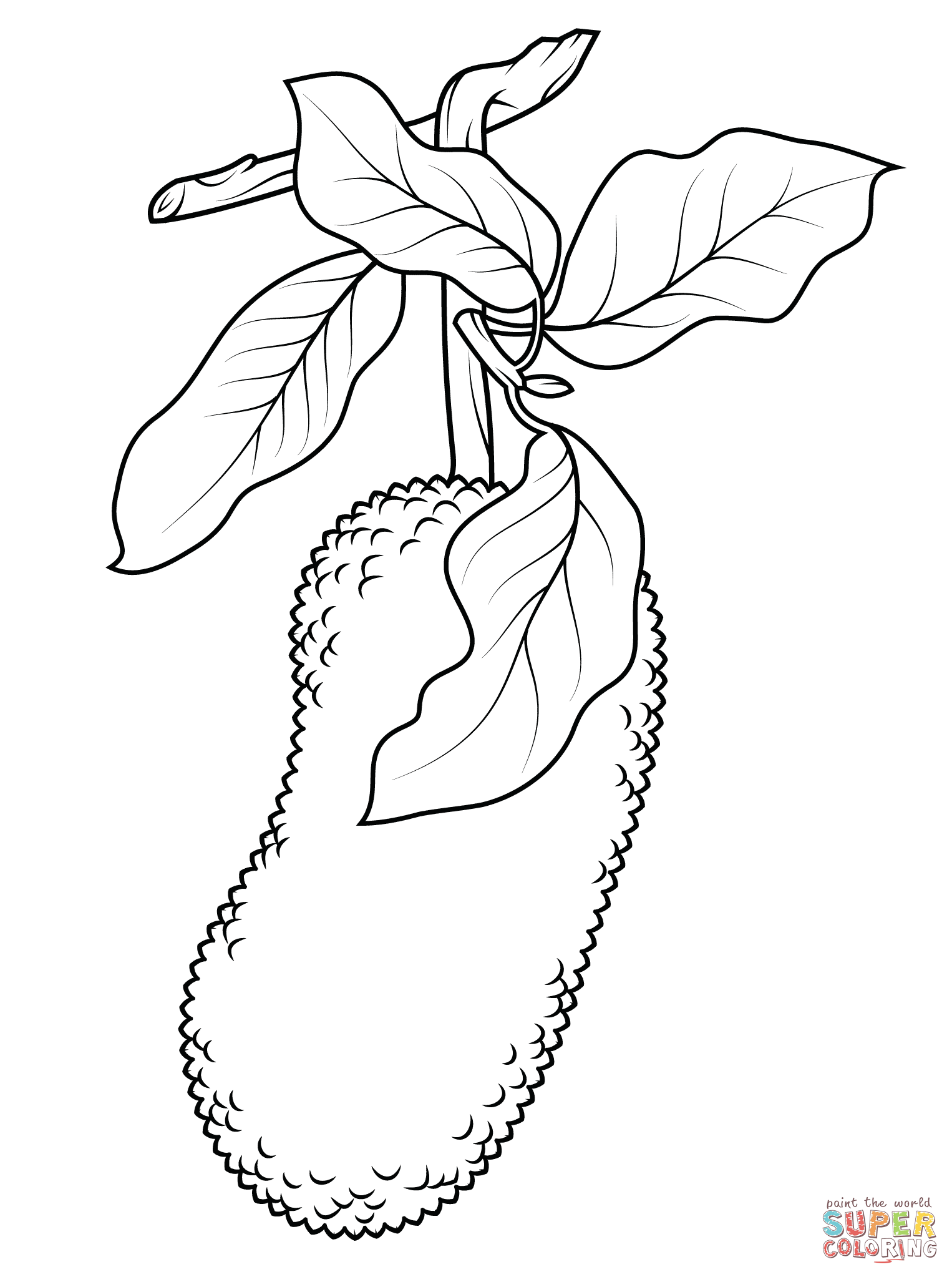 1526x2046 Simplified Blackberry Coloring Page Jackfruit On Branch Free