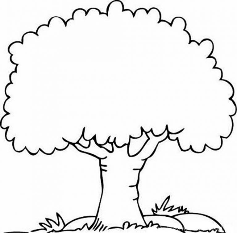 768x755 Coloring Pages Of Different Trees New Inspiring Tree Outline Image