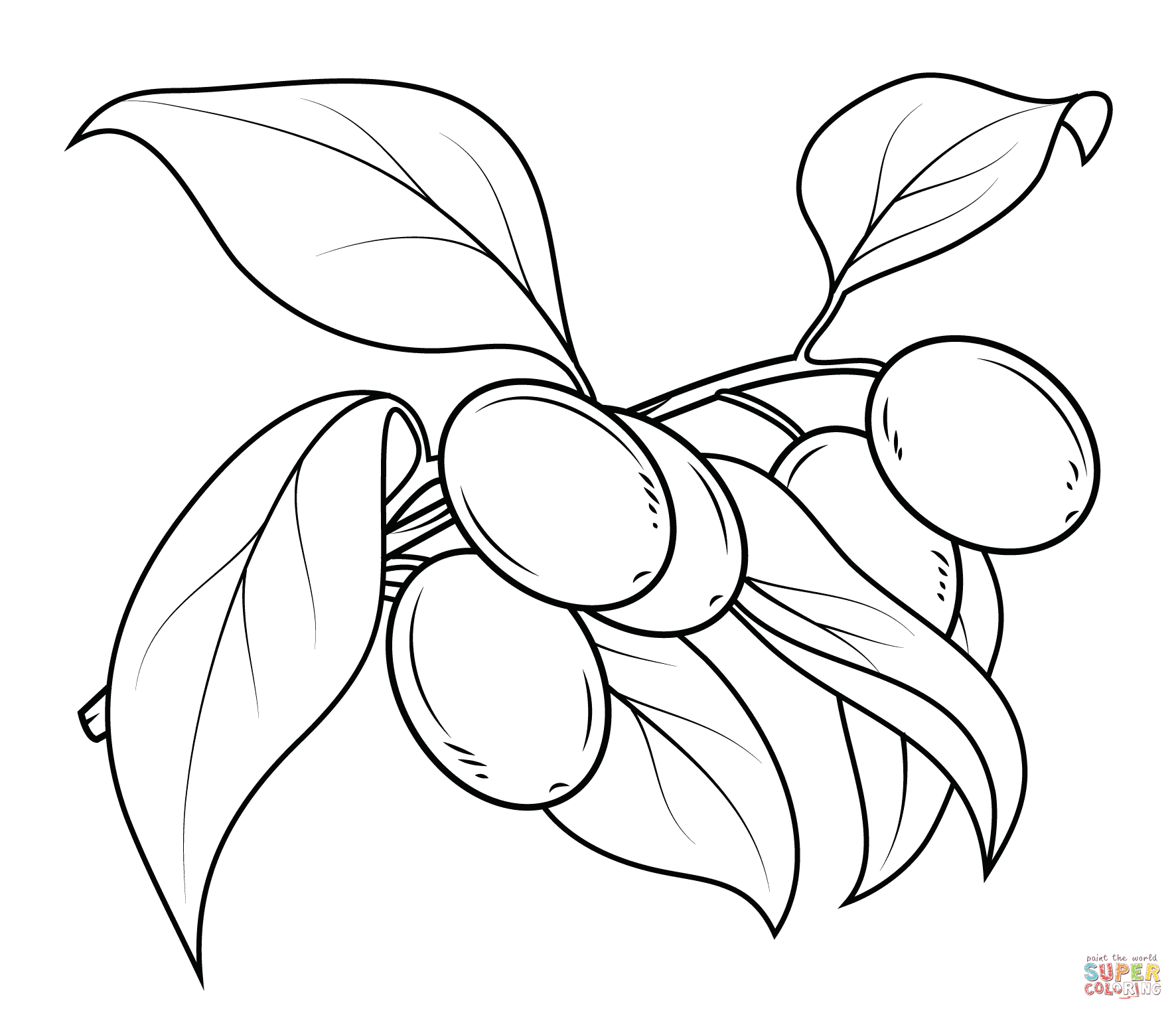 1772x1526 Coloring Pages Olive Tree New Kumquat Branch Coloring Page