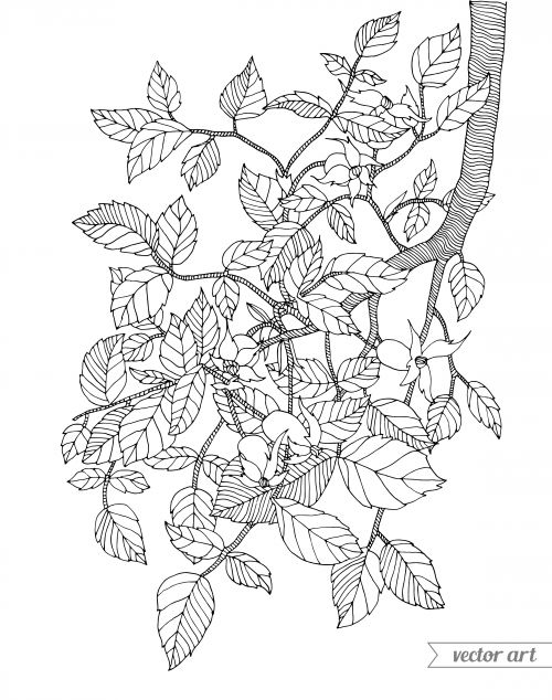 500x634 Best Advanced Nature Coloring Pages Images