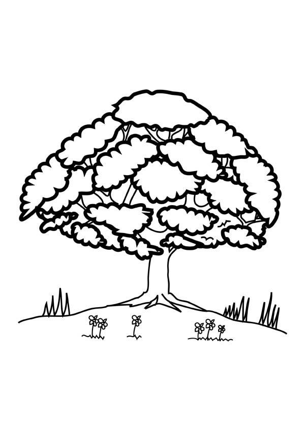 600x849 Oak Tree Up