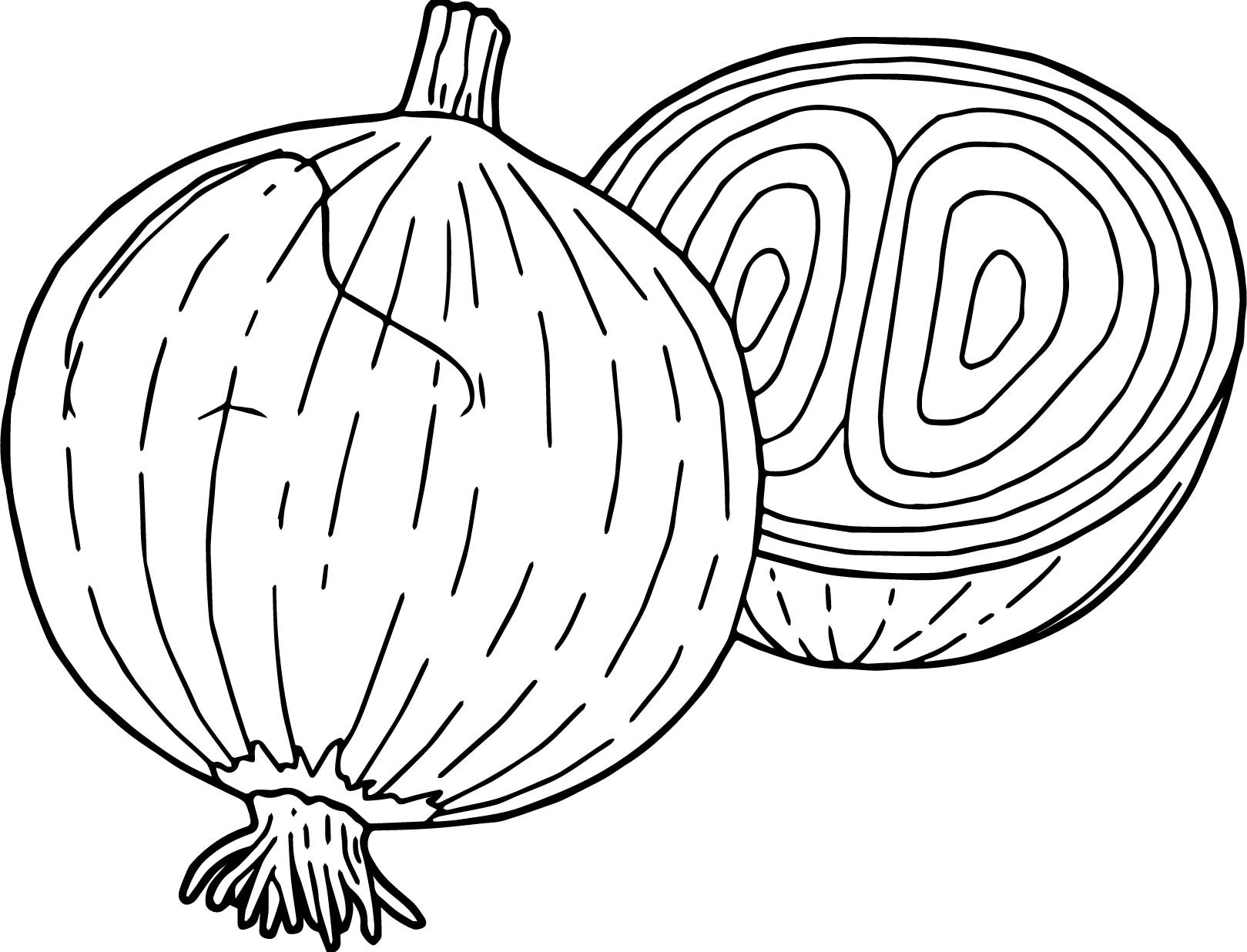 Onion Coloring Page at GetDrawings | Free download
