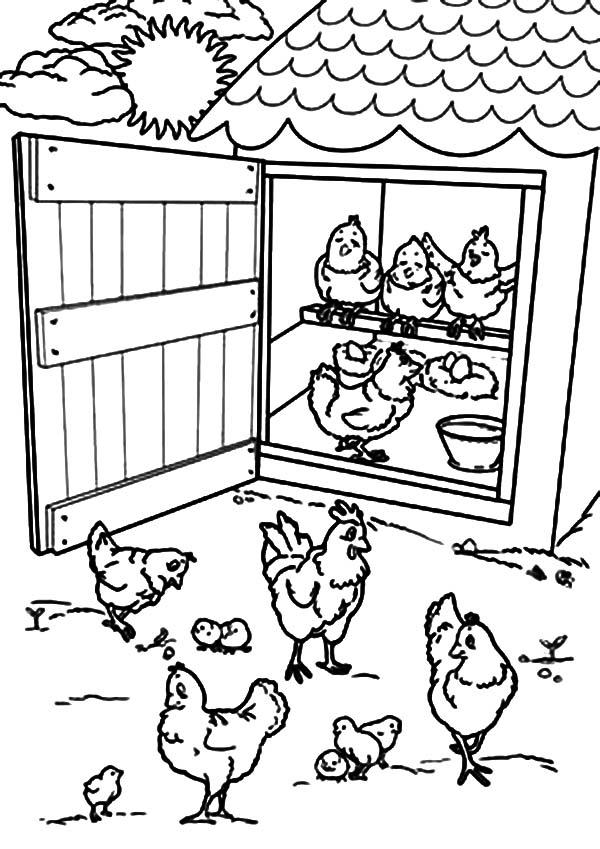 600x849 Open Chicken Coop Door Coloring Pages