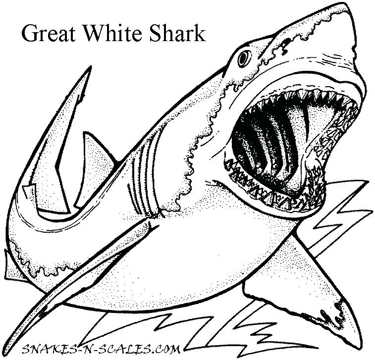 757x727 Mouth Coloring Page Great White Shark Coloring Page Open Mouth