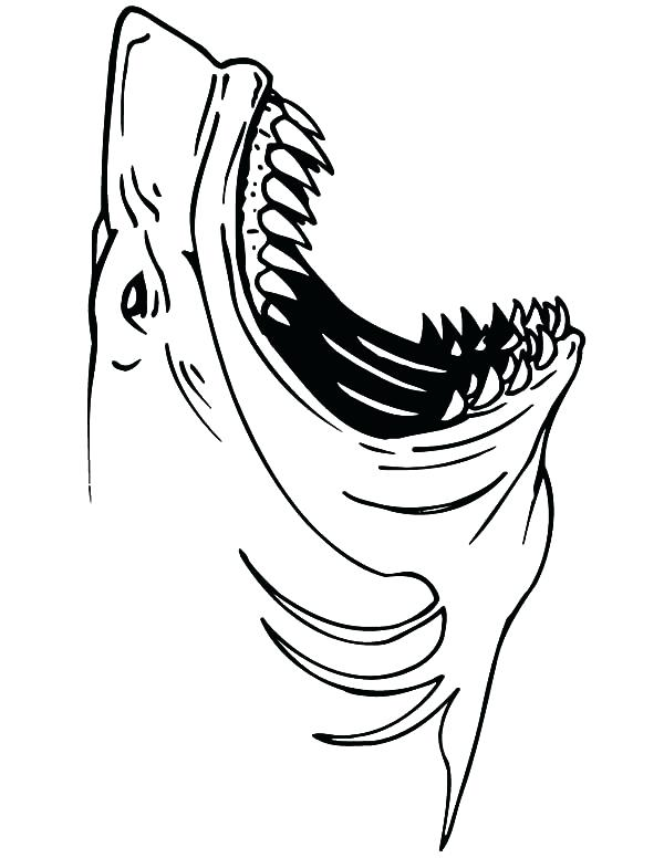 600x776 Sand Shark Pictures Color Open Mouth Coloring Pages Crocodile