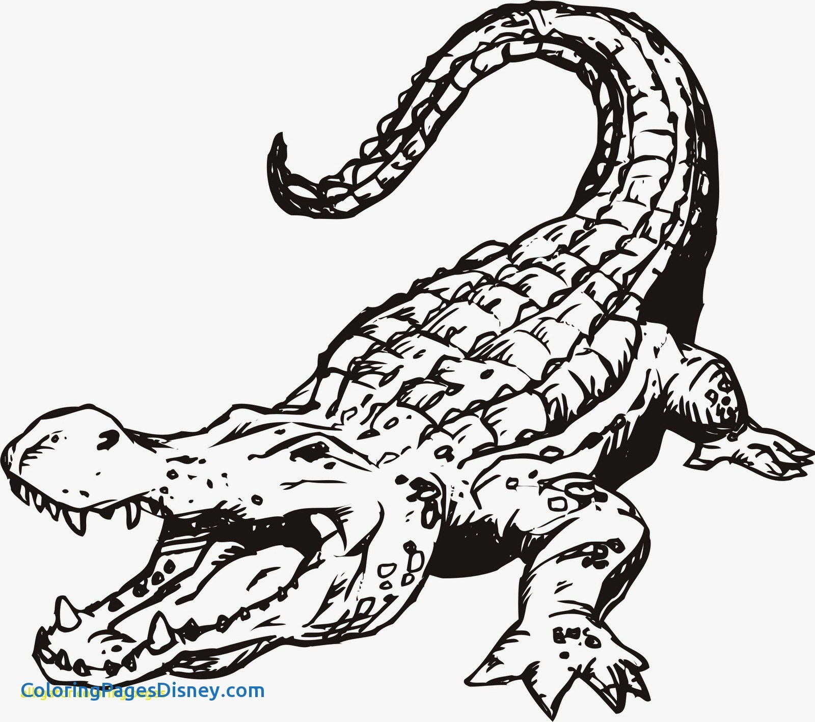 1600x1418 Alligators Coloring Pages Luxury Of Human Mouth Open Coloring