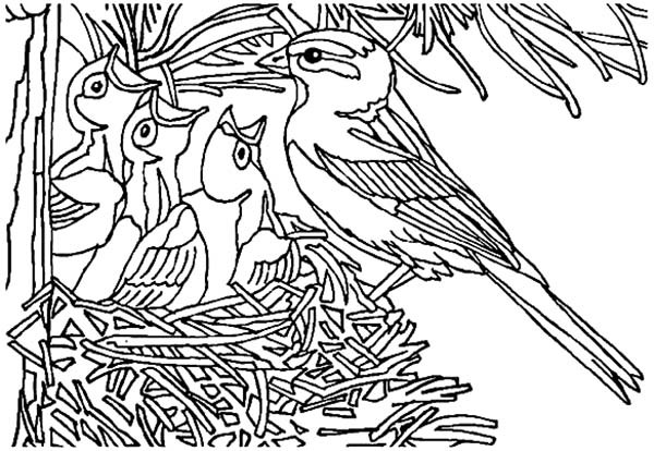 600x414 Baby Bird Open Their Mouth Wide In Bird Nest Coloring Pages Best