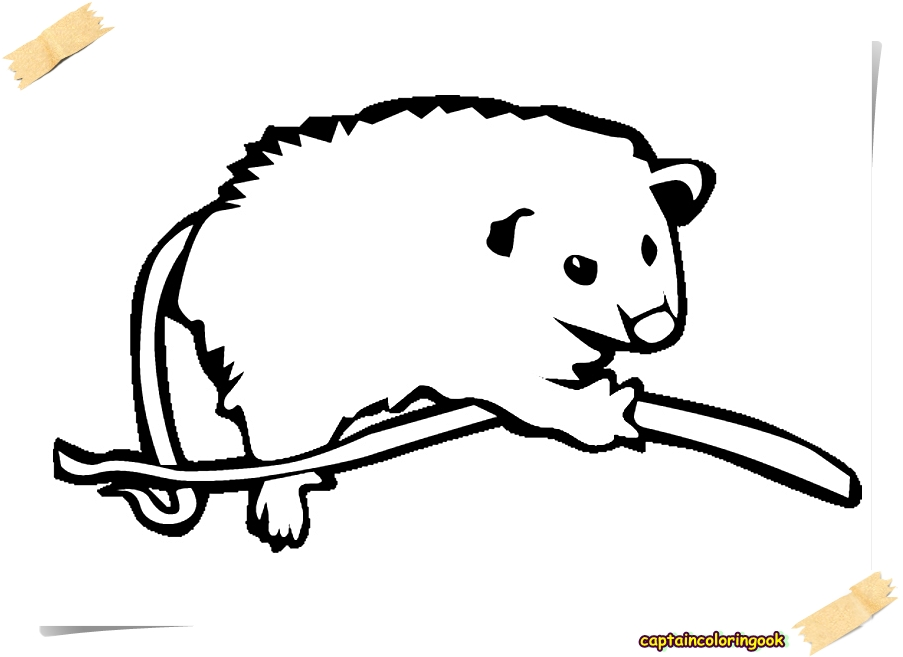 Opossum Coloring Page