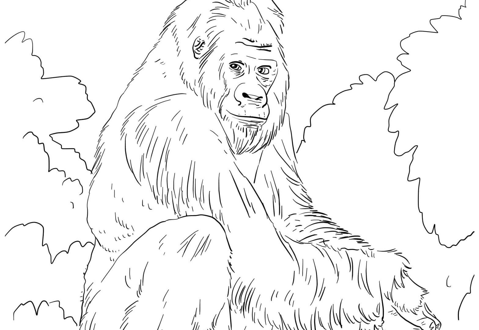 Printable Baby Orangutan Coloring Page for Kids – SupplyMe | 1080x1567