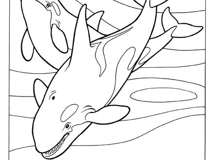 Orca Coloring Pages at GetDrawings | Free download