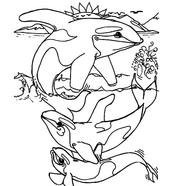 Orca Whale Coloring Page At Getdrawings Com Free For