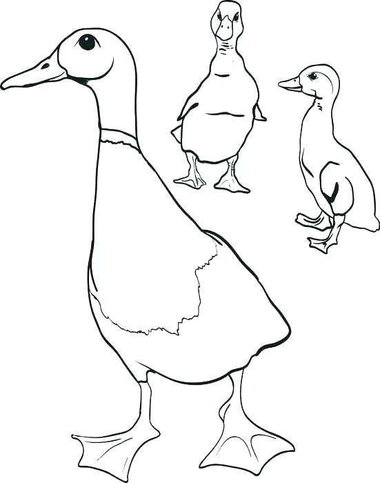 Oregon Coloring Pages at GetDrawings.com | Free for personal use ...