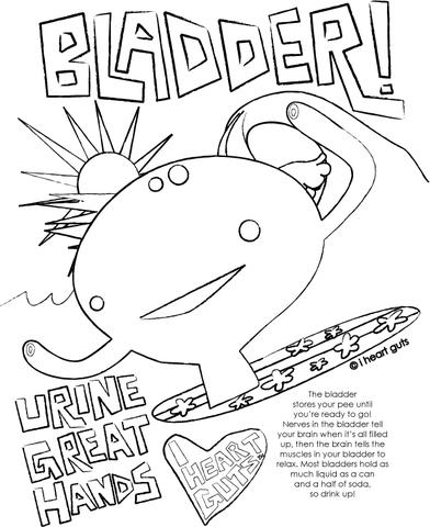 392x480 Bladder Coloring Page I Heart Guts