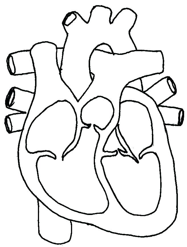 656x864 Coloring Page Of A Heart Heart Anatomy Coloring Pages Heart Organ