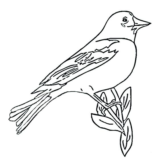 590x576 Baltimore Orioles Coloring Pages Orioles Coloring Pages Baltimore