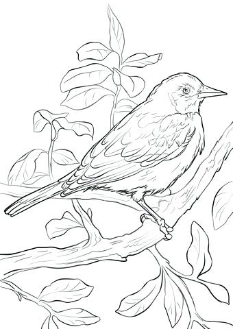 340x480 Baltimore Orioles Coloring Pages Orioles Coloring Pages Coloring