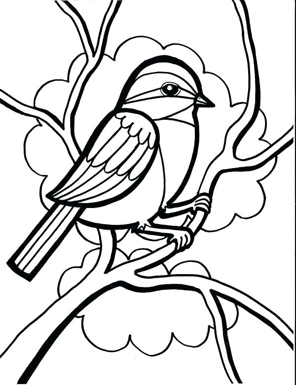 600x781 Chickadee Coloring Page Orioles Coloring Pages Chickadee Drawing