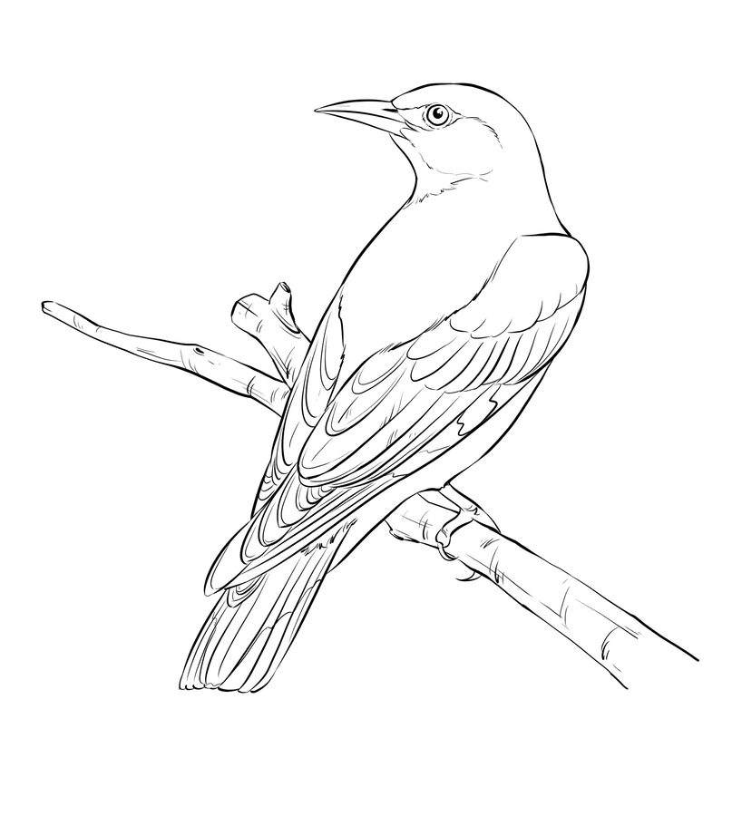 818x900 Coloring Pages Orioles, Printable For Kids Adults, Free