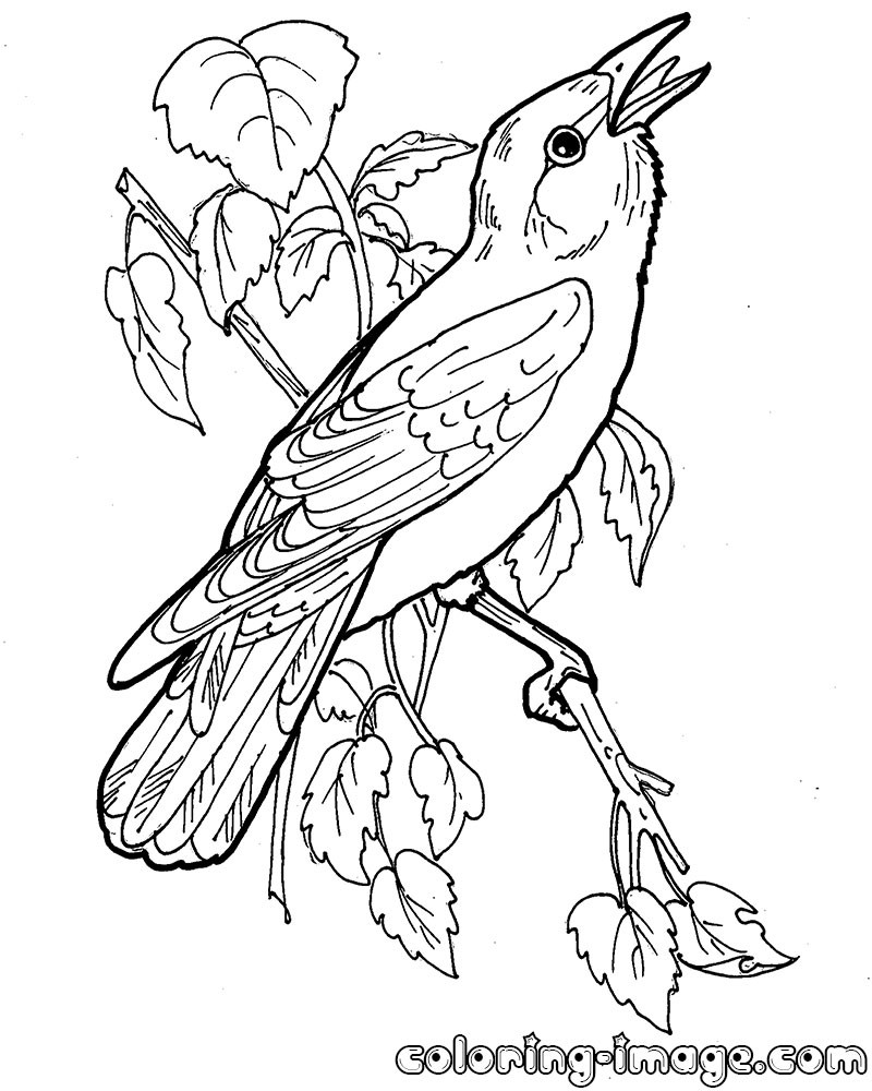 800x1000 Printable Bird Orioles Coloring Pages For Kids