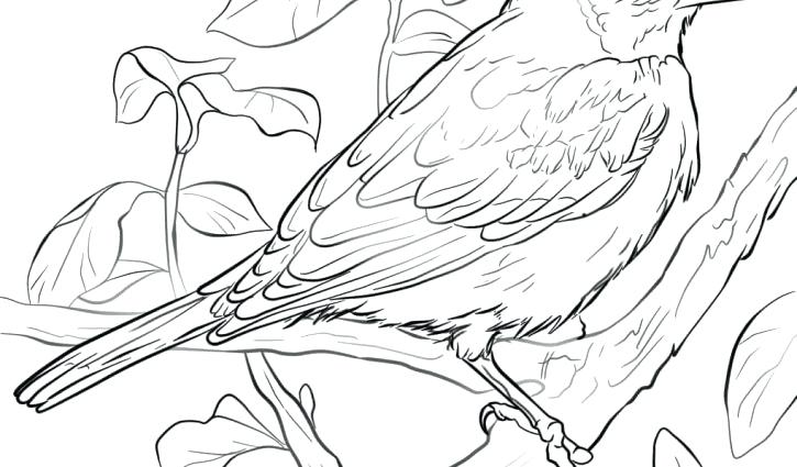 725x425 Baltimore Orioles Coloring Pages