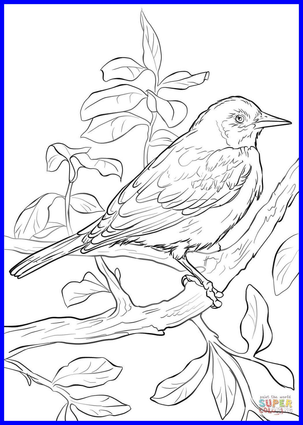 1048x1468 Appealing Baltimore Oriole Coloring Page Printable Pict
