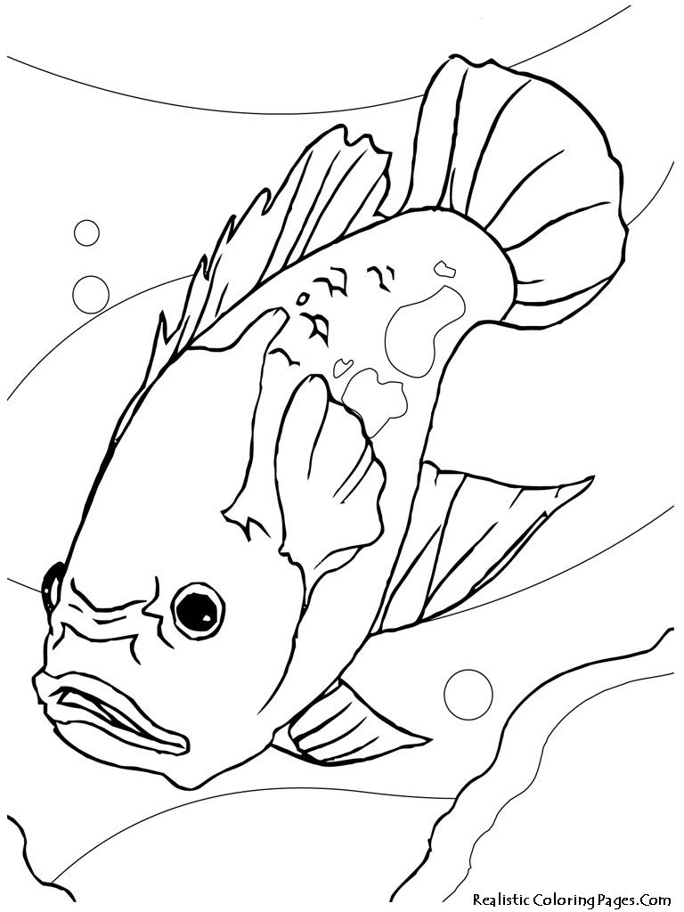 768x1024 Oscar Aquarium Fish Kids Coloring Pages Meg