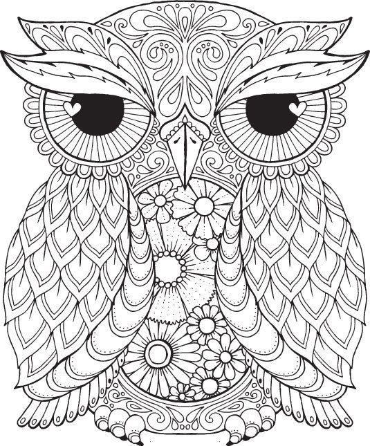 535x645 Owl Color Pages