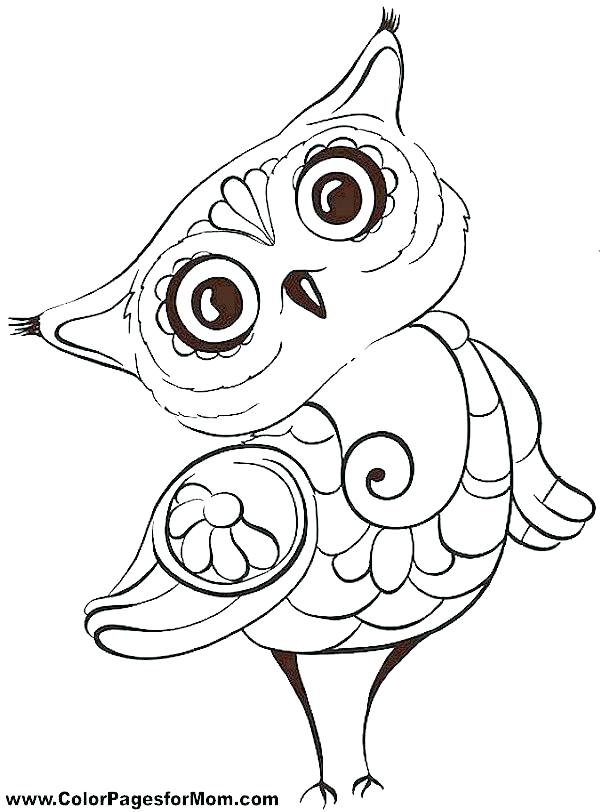 600x812 Owl Color Pages Free Owl Coloring Pages Owl Color Page Pin Drawn