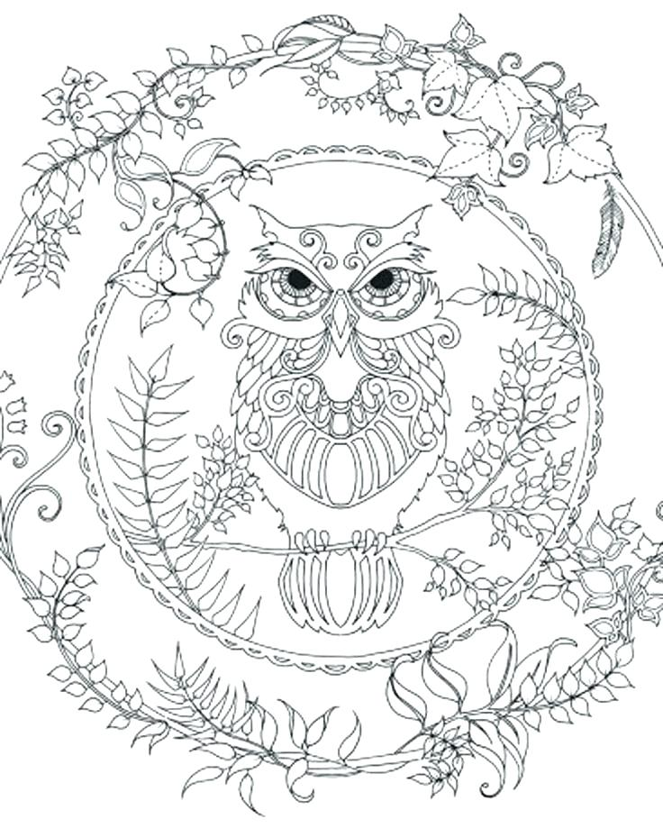 736x919 Owl Color Pages Printable Owl Coloring Pages Adult Coloring Pages